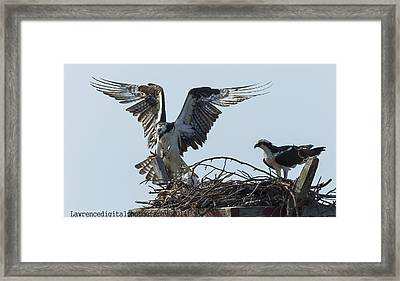 Are You Watching ... This How You Land    Framed Print by Glenn Lawrence