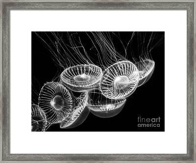 Area 51 - Moon Jellies Aurelia Labiata Framed Print