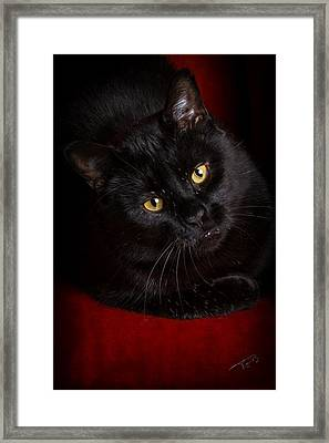 Aren't I Too Beautiful To Behold Framed Print by Tom Buchanan