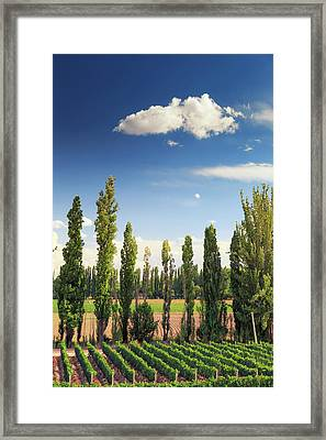 Argentina, Mendoza, Wineries Framed Print by Michele Falzone