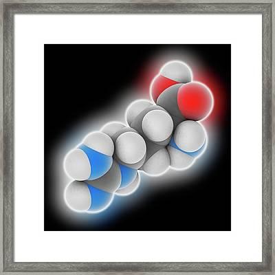 Arginine Molecule Framed Print by Laguna Design