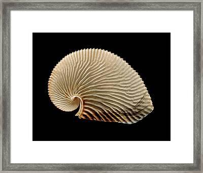 Argonaut Octopus Eggcase Shell Framed Print by Gilles Mermet
