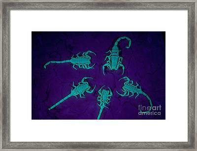 Arizona Bark Scorpions Framed Print by Kenneth M Highfill