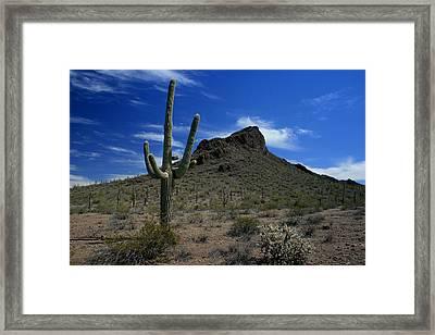 Arizona Cacti   Framed Print by Scott Cunningham