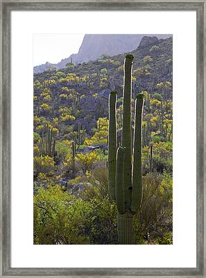 Arizona Desert Framed Print by Samuriah Robinson
