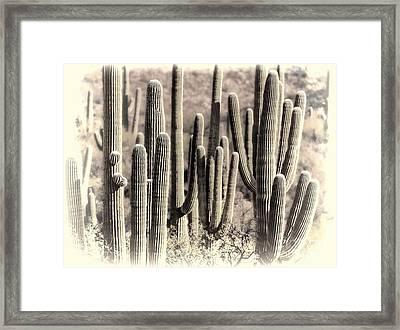 Arizona Dry Cactus Thicket Framed Print by Henry Kowalski