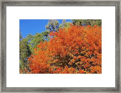 Arizona Fall 3 Framed Print