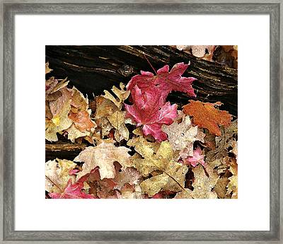 Arizona Fall Colors Framed Print
