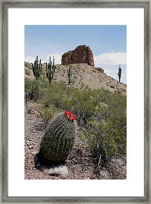 Arizona Icons Framed Print