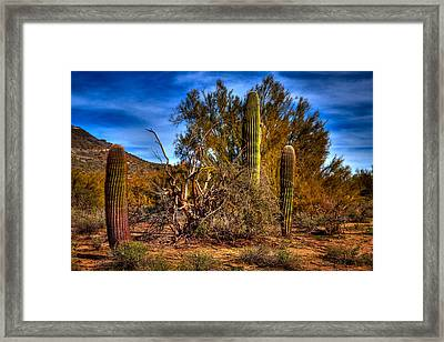 Arizona Landscape II Framed Print by David Patterson