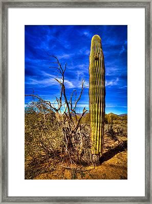 Arizona Landscape IIi Framed Print by David Patterson