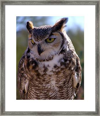 Arizona Owl Visit  Framed Print