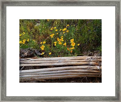 Arizona Poppy Framed Print