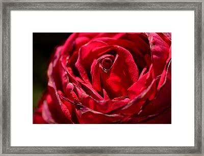 Arizona Rose I Framed Print