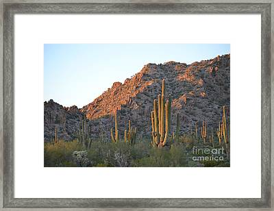 Arizona Saguaro Cactus  Framed Print by Beverly Guilliams
