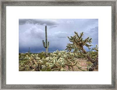 Arizona Sonora Desert Landscape 1 Framed Print by Bob Christopher