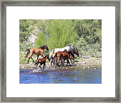 Arizona Wild Horse Family Framed Print