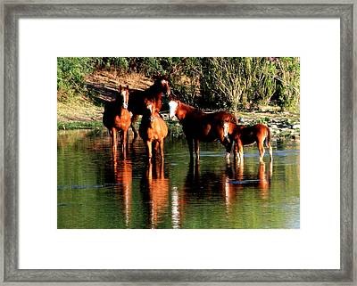 Arizona Wild Horses Framed Print