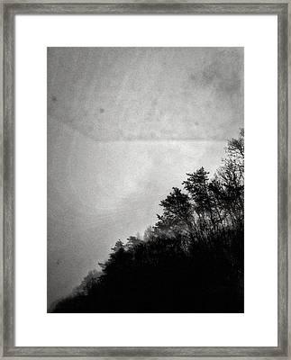 Arkansas Trees Framed Print