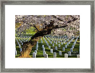 Arlington National Cemetary Framed Print by Brian Jannsen