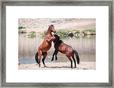 Hoof Hold Framed Print by Lula Adams