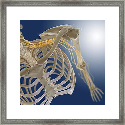 Arm Nerves, Artwork Framed Print by Science Photo Library