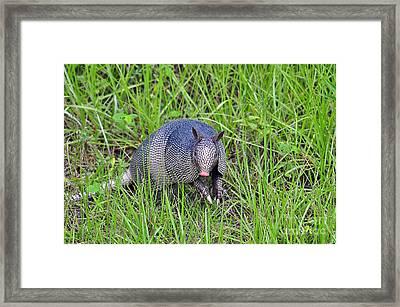 Armadillo Attitude Framed Print by Al Powell Photography USA
