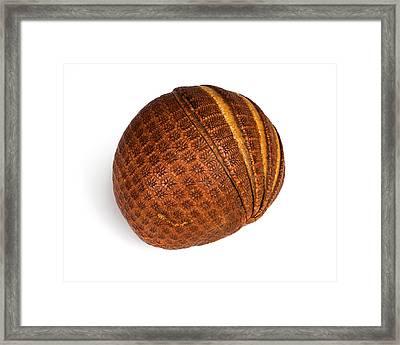 Armadillo Carapace Framed Print