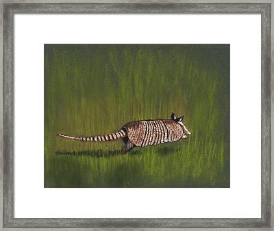 Armadillo Run Framed Print