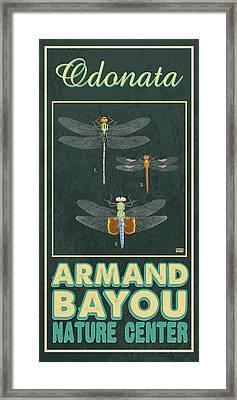 Armand Bayou Dragonfly Framed Print by Jim Sanders