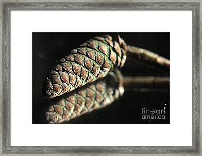 Armored Pine Cone Framed Print