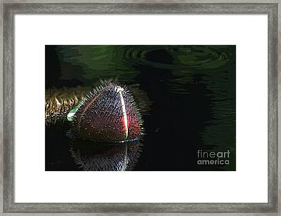 Nature's Armour Framed Print