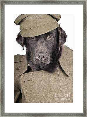 Army Dog Framed Print by Justin Paget