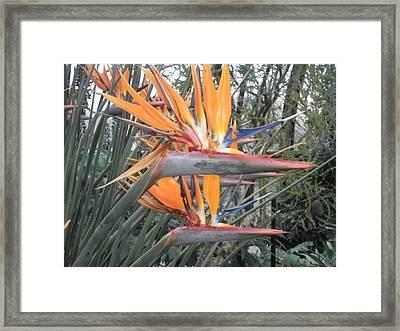 Army Of Birds Framed Print