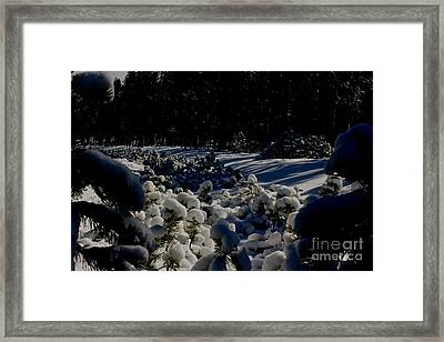 Army Of Trees Framed Print by Tim Rice