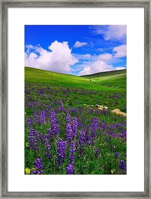 Framed Print featuring the photograph Aroma Of Summer by Kadek Susanto