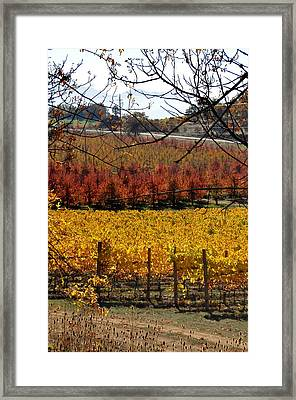 Around And About In My Neck Of The Woods Series 28 Framed Print