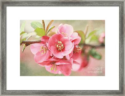 Around The Corner Framed Print by Sylvia Cook