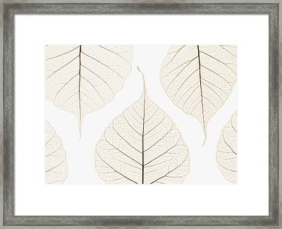 Arranged Leaves Framed Print by Kelly Redinger
