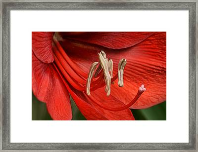 Arrayed Like One Of These Framed Print