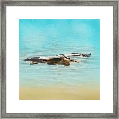 Arrival - Blue Heron - Wildlife Framed Print by Jai Johnson