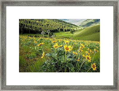 Framed Print featuring the photograph Arrow Leaf Balsam Root by Jack Bell