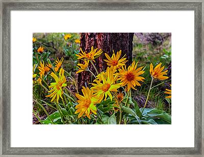 Framed Print featuring the painting Arrowleaf Balsamroot by Omaste Witkowski