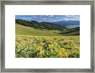 Arrowleaf Balsamroot Wildflowers Framed Print