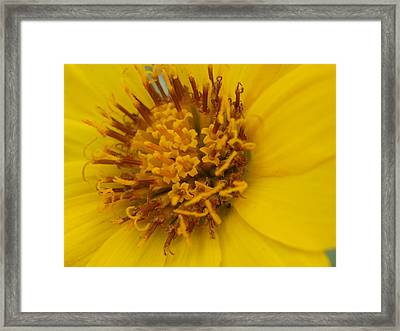 Arrowleaf Heart Framed Print by Jenessa Rahn