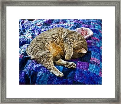 Cat Nap Framed Print by Tim Buisman