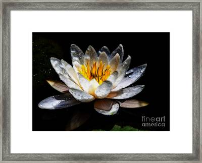 Art Lily Framed Print