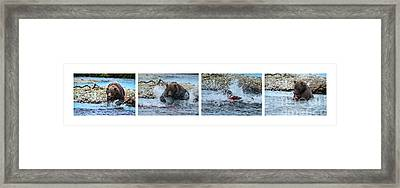 Art Of Catching Salmon  Framed Print by Dan Friend