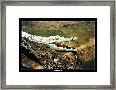 Art Work 158 Alligator Framed Print by Alexander Drum