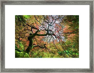 Arterial Tree Framed Print
